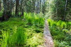 Paraíso verde Imágenes de archivo libres de regalías