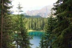 Paraíso verde de madera de pino, Italia Imagen de archivo libre de regalías