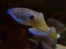 Para śliczni opłakuje cuttlefish rozciąga ręki z drugi jeden w tle Fotografia Stock