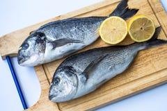 Para świeży surowy dennego leszcza ryba Sparus aurata lub Orata na drewnianej ciapanie desce na białym tle fotografia royalty free
