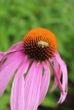 Para arriba-cierre de la flor Fotos de archivo