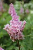 Para arriba-cierre de la flor Foto de archivo libre de regalías