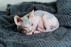 Para arriba encrespado gatito foto de archivo