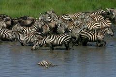 Para baixo no rio, Tanzânia Imagem de Stock