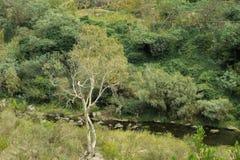 Para baixo pelo rio Imagem de Stock