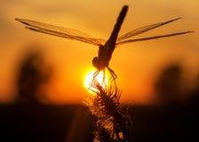 Para beber el sol Foto de archivo libre de regalías