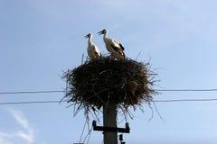 Para bociany w gniazdeczka 2 bocianie Fotografia Stock