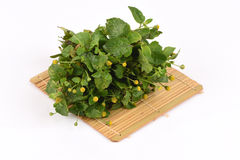 Para cress, Toothache Plant, Toothache plant, Brazil cress Toothache plant, Pellitory, Spot flower. Stock Photo