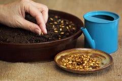 Para a decoração de Easter - começ o solo e sementes prontos Foto de Stock