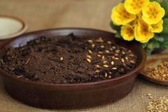 Para a decoração de Easter - começ o solo e sementes prontos Imagem de Stock Royalty Free