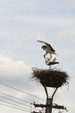 Para dwa białego bociana w gniazdeczku na lamppost fotografia stock