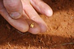 Para encontrar uma pepita de ouro Fotografia de Stock