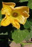 Para a flor verde foto de stock royalty free