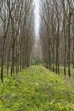 Para-Holzbäume Stockfotografie