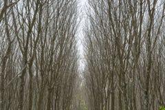 Para-Holzbäume Lizenzfreies Stockfoto