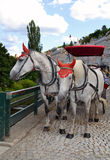Para Konie zdjęcia royalty free