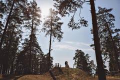 Para małżeńska w sosnowym lesie Fotografia Royalty Free