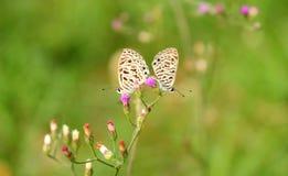 Para mały motyl Fotografia Stock