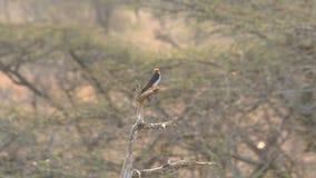 Para mali ptaki bierze daleko od drzewa zbiory
