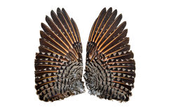 Para migotanie wierzchu ptasi skrzydła fotografia stock