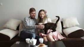 Para muska kota i ogląda tv siedzi na leżanki kanapie w domu, napój herbata od białego herbata setu zbiory wideo