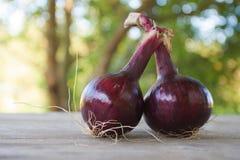 Para naturalne czerwone cebule Fotografia Stock