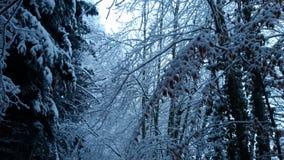 Para a neve escura dos ramos de árvores do inverno do resto Fotografia de Stock