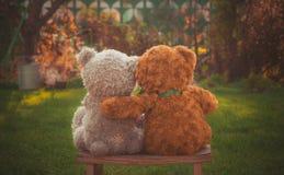 Para niedźwiedzie na spacerze w ogródzie Zdjęcia Royalty Free