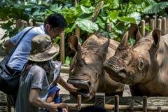 Para nosorożec karmi gościami Singapur zoo w Singapur Fotografia Stock