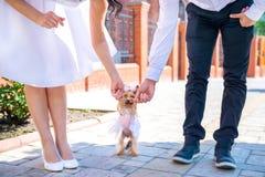Para nowożeńcy trzyma psa w sukni Obrazy Royalty Free