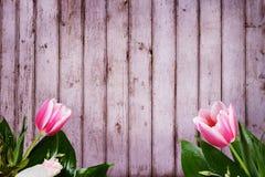 Para o fundo das felicitações com as tulipas no primeiro plano Fotografia de Stock Royalty Free