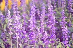Para obtenha-me não o campo de flor, foco seletivo Foto de Stock