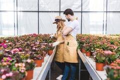 Para ogrodniczki w rękawiczkach pracuje w szklarni obraz stock