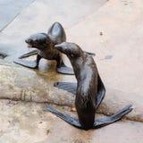 Para północne futerkowe foki Obrazy Royalty Free