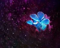 Para piękny mały błękitny motyli czarodziejski obsiadanie na purpurach Obraz Stock