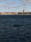 Para Prawi wieloryby Fotografia Royalty Free