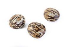 Para rubber seeds on white Royalty Free Stock Photos