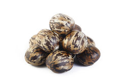 Para rubber seeds Royalty Free Stock Photography
