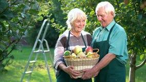 Para seniory, jabłczany kosz zbiory