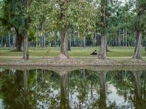 Para siedzi i relaksuje pod drzewami w parku Zdjęcia Royalty Free