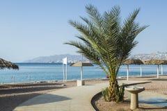 Para-sol e palma na praia central de Eilat Fotografia de Stock