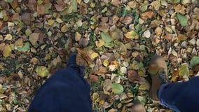 Para spacery przez odgórny widok nogi, buty jesieni zieleni i koloru żółtego ulistnienie, i HD zbiory wideo