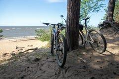 Para stoi pod sosnami na piaskowatej plaży bicykle zdjęcie royalty free