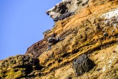 Para sunbathing Galapagos morskie iguany obrazy stock
