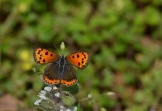 Para symetryczni skrzydła Fotografia Stock