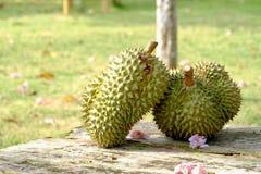 Para Tajlandzkie Durian owoc na starym drewnianym stole w plenerowym miejscu z plamy zieleni ogr?du t?em obraz royalty free