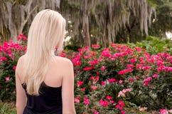 Para trás da mulher caucasiano nova com o cabelo louro longo que olha Rose Bush de florescência completa Fotografia de Stock Royalty Free