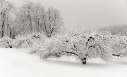 Para un meditation& x27 del invierno; s foto de archivo