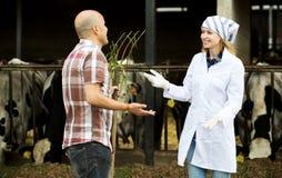 Para weterynarzi pracuje z milky krowami Zdjęcia Stock