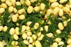 Paraboloïde de céleri de soja image libre de droits